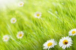 Daisy's and Grass