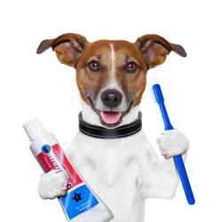 Toothbrush Dog